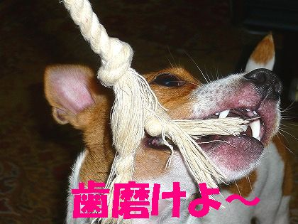 アイドルは「歯」が命