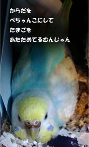 卵暖めムンジャンZ