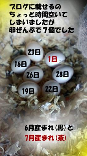 7個の卵のコピーZ