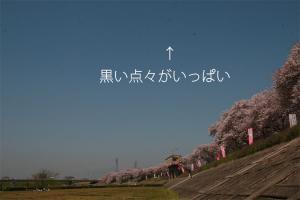 20090411_02.jpg