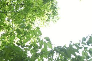 20090501.jpg