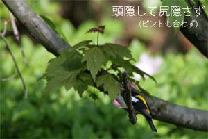 20090501_01.jpg