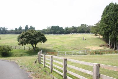 羊の放牧場