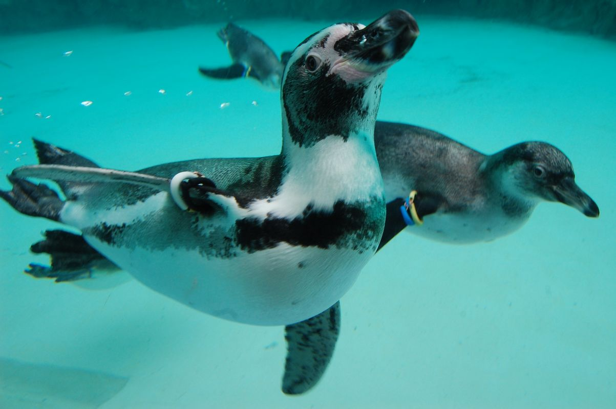 ペンギンの生態