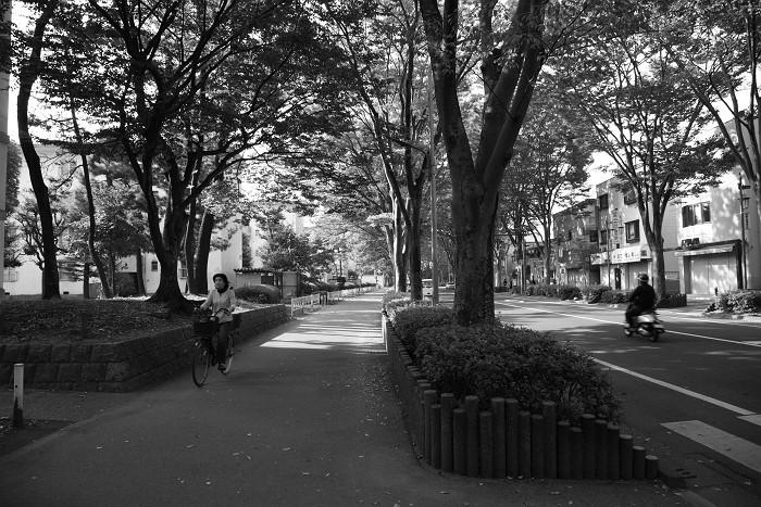 ケヤキ通りの朝