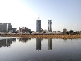 sakura2010-6.jpg