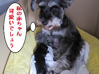 胡桃ちゃん