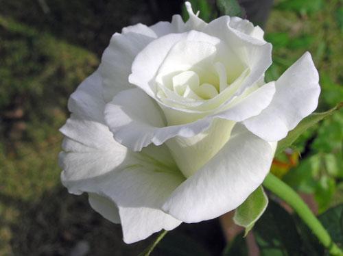 2007_10_16_15.jpg