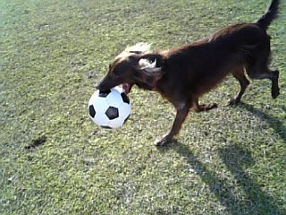 サッカーボール~♪