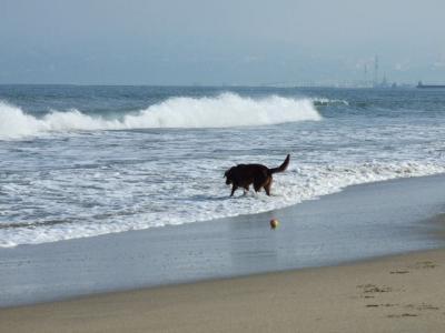ちょっと波が、、、