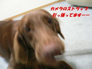 わるわる~