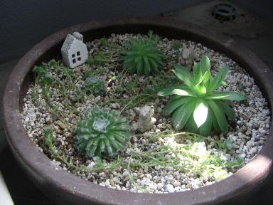センペル鉢