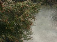 スギ花粉の猛威