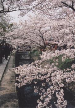 母と京都へ 5