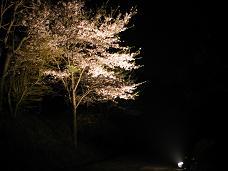 4-14 瞑想の森の桜 ライトアップ