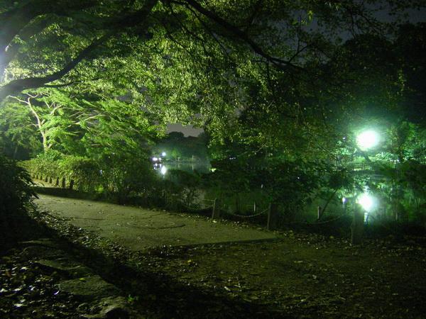 夜の善福寺