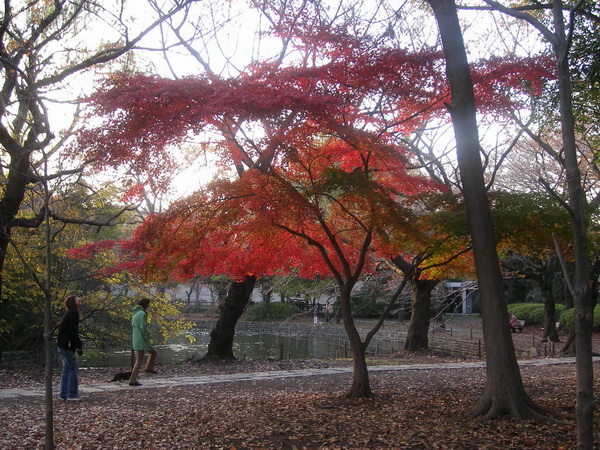 下の池紅葉