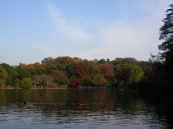 上の池紅葉