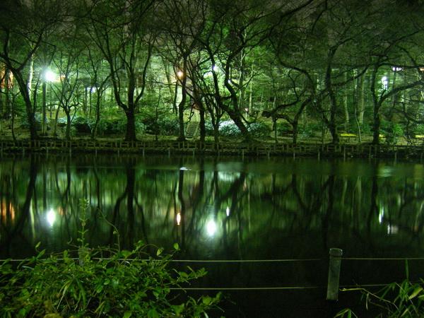 静寂の池畔