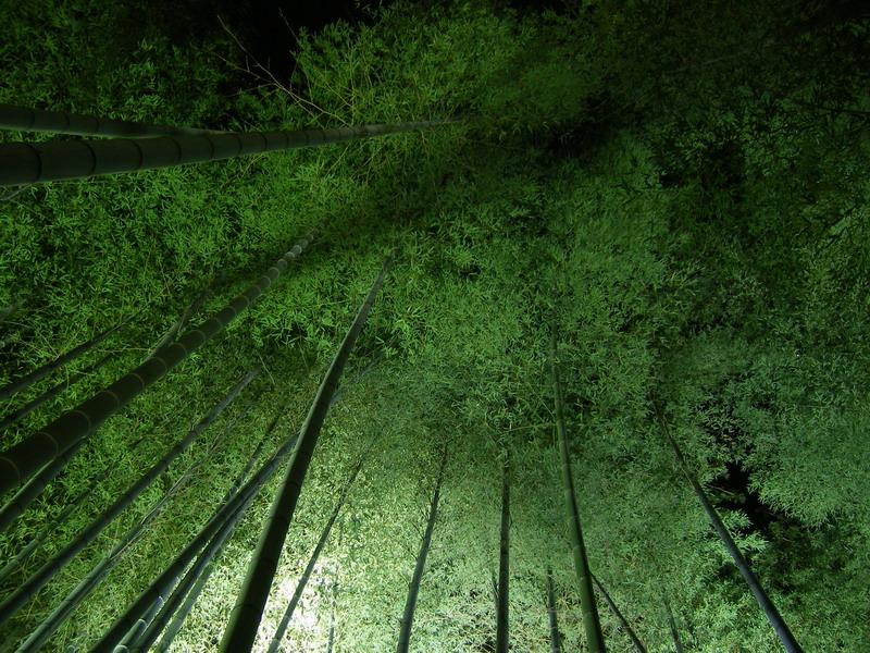 高台寺竹林2
