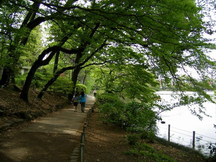 木陰の遊歩道