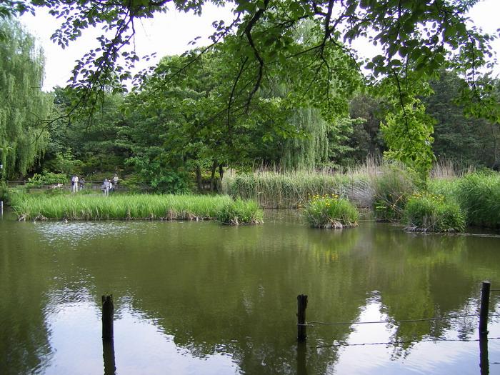 池畔の茂み