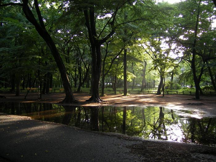 陽の差し込む雑木林