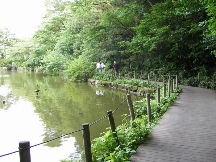 石神井公園1