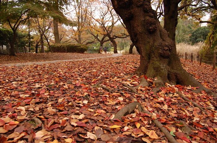 落ち葉の遊歩道