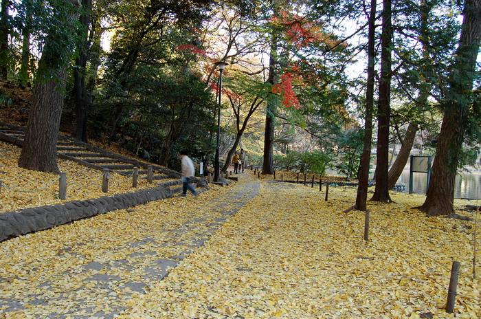 黄色の遊歩道
