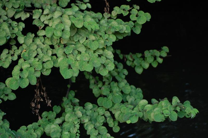 池の葉っぱ
