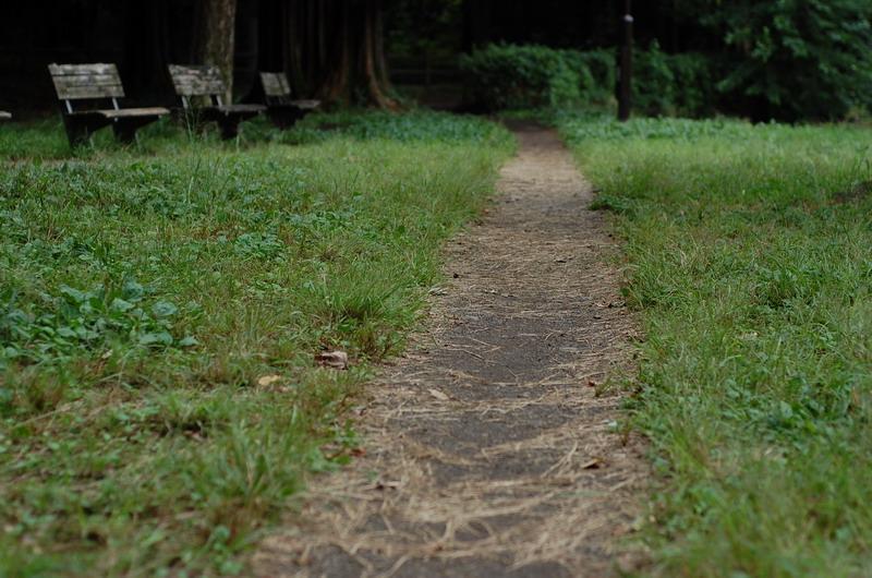 ベンチ傍の遊歩道
