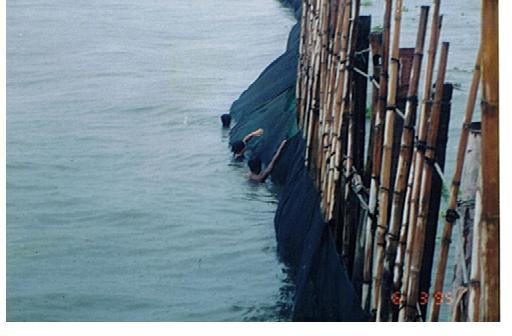 ラグナ湖での網チェック
