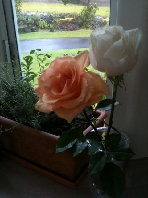 April's Roses 02192012
