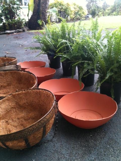 Planting Ferns in Hanging Baskets 1
