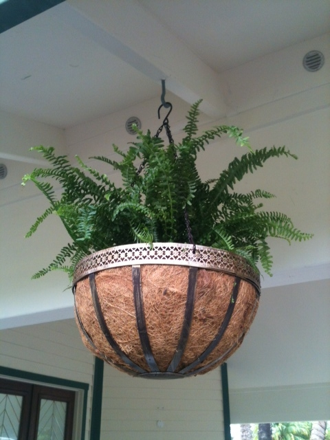 Planting Ferns in Hanging Baskets 3