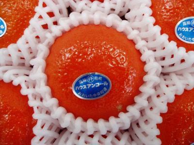アンコールオレンジ