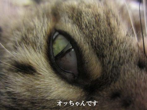 02_20110126211300.jpg