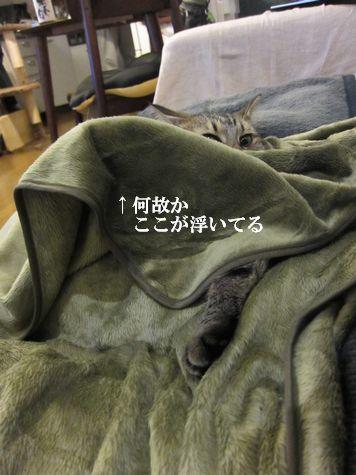 16_20101106211705.jpg