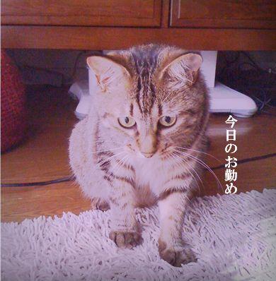 1_20100711230006.jpg