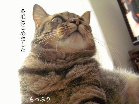 1_20100924190650.jpg