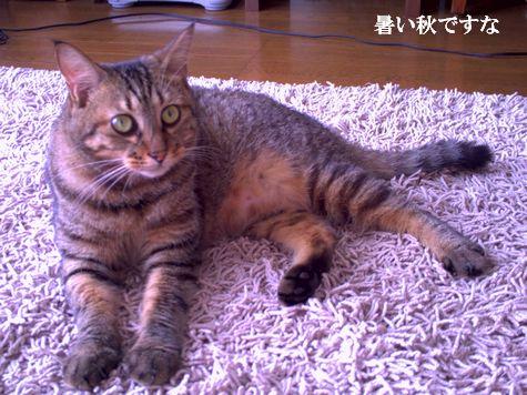 1_20101013103225.jpg