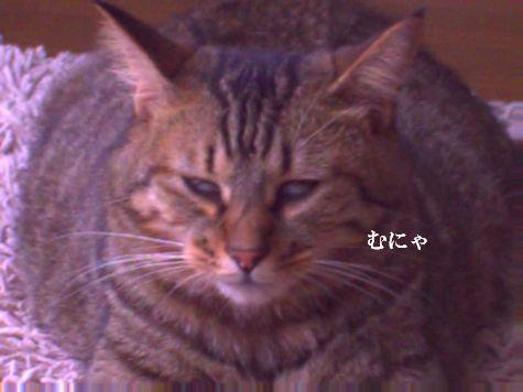 3_20101013103224.jpg