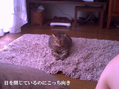 5_20101013103224.jpg