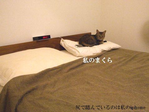 6_20100924190649.jpg