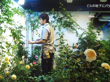バラの栽培講座1