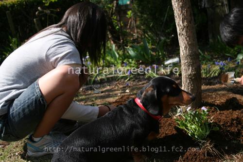 庭にて~ルビー~1