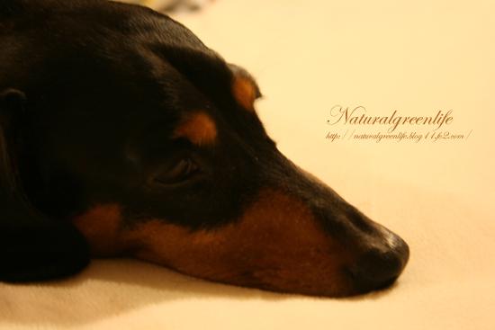 眠い・・・ルビー