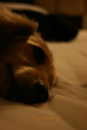 眠気と戦うパール