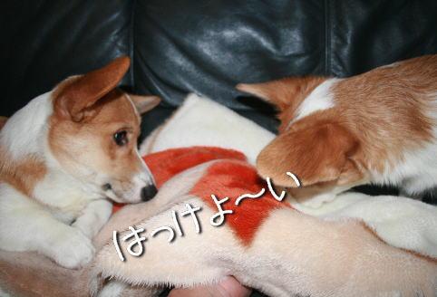fuukona1122.jpg
